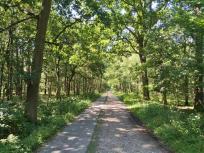 Niederländischer Waldweg: Links für Radfahrer, rechts für Wanderer und Reiter