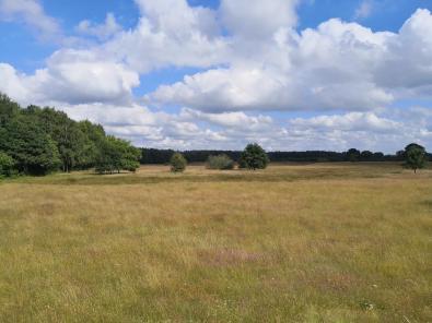 Heide-ähnliche Landschaft am Rande des Sees