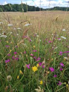 Wildblumen in der Heidewiese
