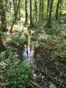 """Bachlauf im Naturschutzgebiet """"Sieben Quellen"""""""