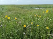 Wildblumen in der Vegetationnszone