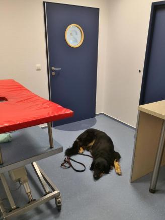 In der Tierklinik vor der OP
