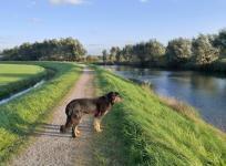 Doxi am Veluwsche Kanal