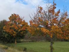 Der Herbst dreht langsam auf
