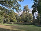 Bäume im Schlossgarten