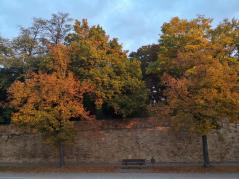 Bäume im Schlossgarten im Morgenlicht