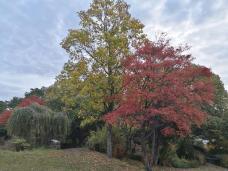 Herbstlich wirken die Bäume am Ehrenmal