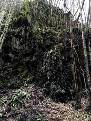 Wie im Urwald
