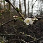 Wanderung am Baldeneysee und Pilz-Risotto