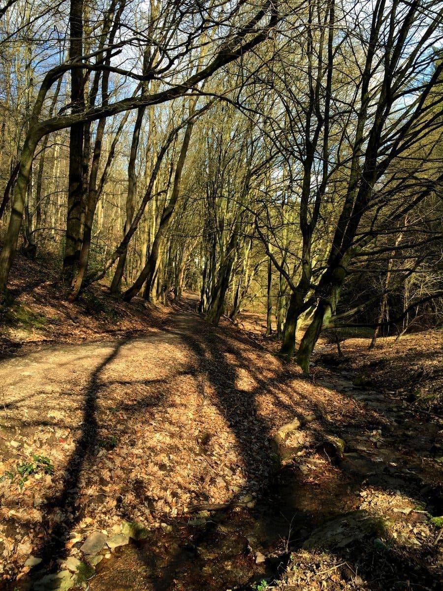 Wanderung durch das Gelpetal in Wuppertal und Linsencurry