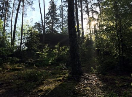 Morgens im Wald