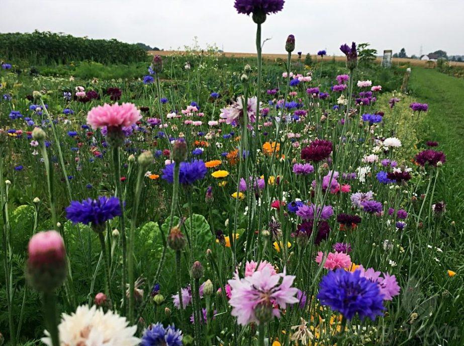 Bunte Wildblumen.