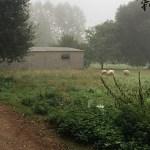 Mein Jakobsweg – Von Ribadiso nach O Pedrouzo