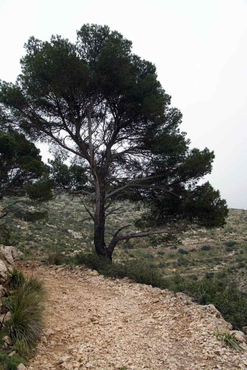 GR 221 Sant Elm - Ses Fontanelles_139