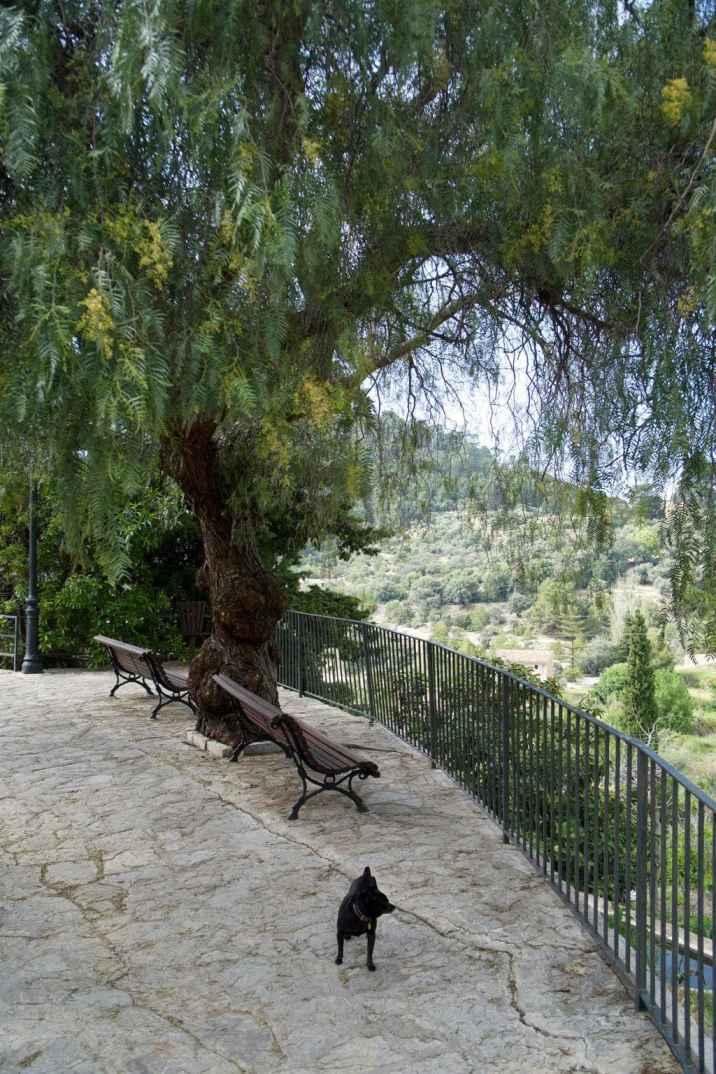 GR 221 Ses Fontanelles - Estellencs_1_8