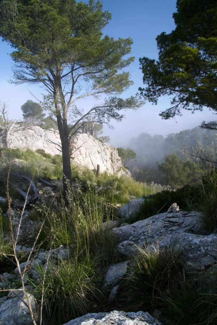 GR 221 Ses Fontanelles - Estellencs_36