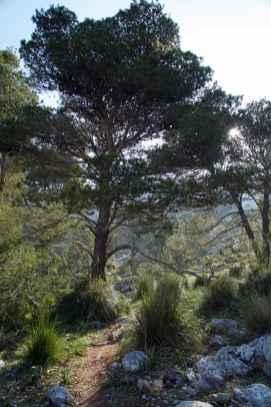 GR 221 Ses Fontanelles - Estellencs_42