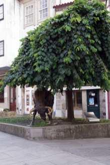 Camino Português DSC01558