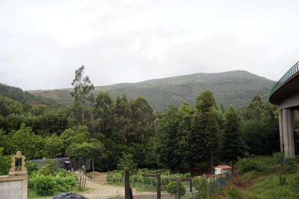 Camino Português DSC01575