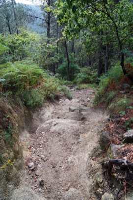 Camino Português DSC01593