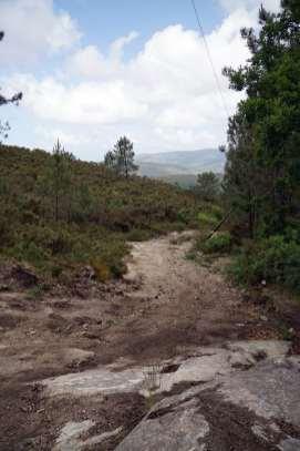 Camino Português DSC01602