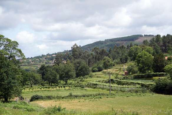Camino Português DSC01607