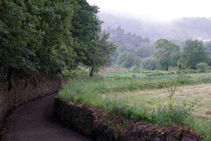 Camino Português DSC01627