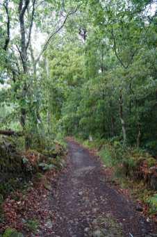 Camino Português DSC01643