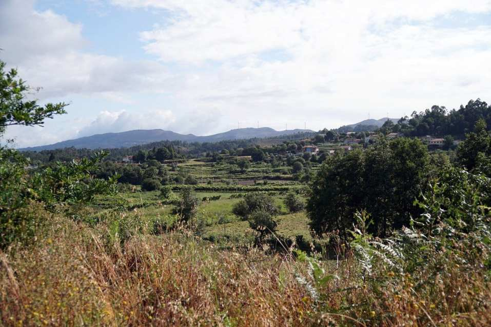 Camino Português DSC01657