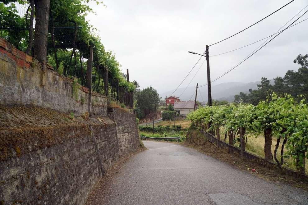Camino Português DSC01758