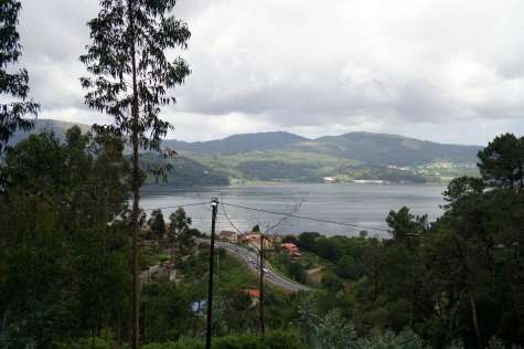 Camino Português DSC01828