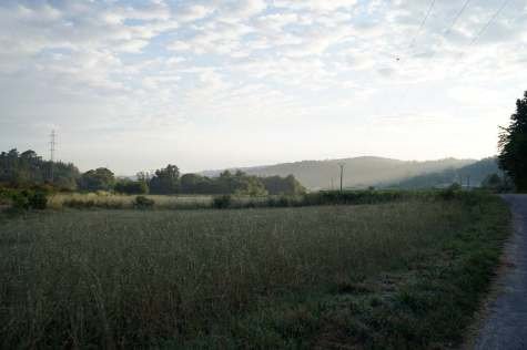 Camino Português DSC01978