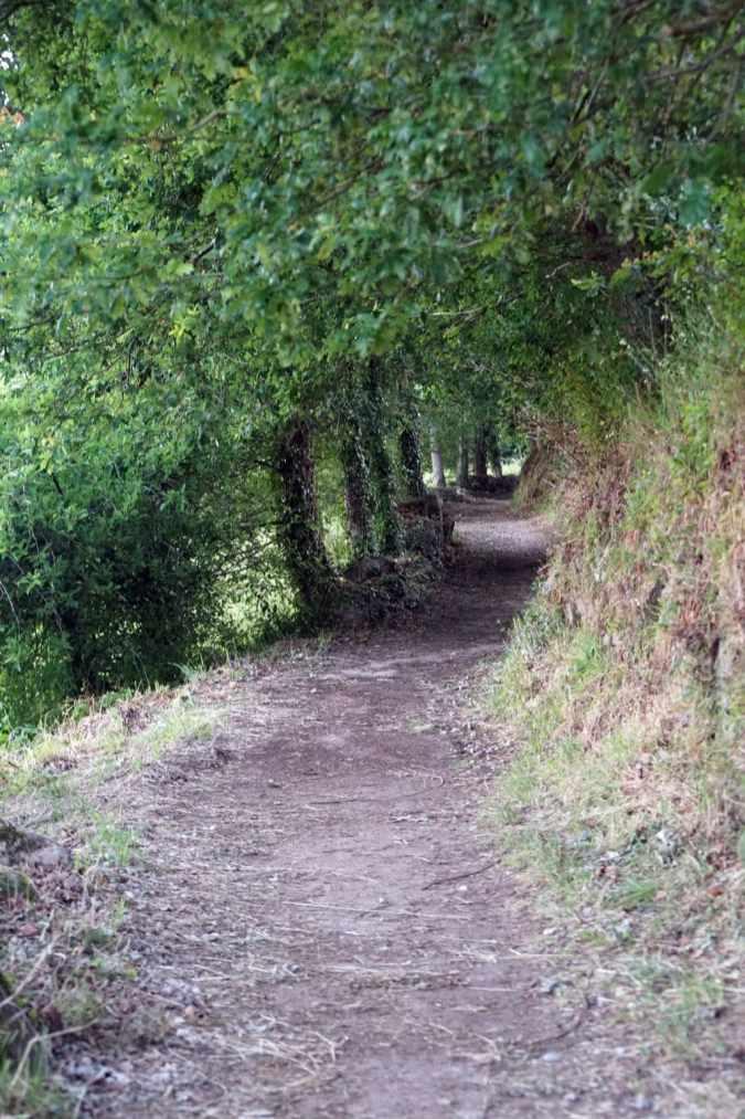Camino Português DSC02026