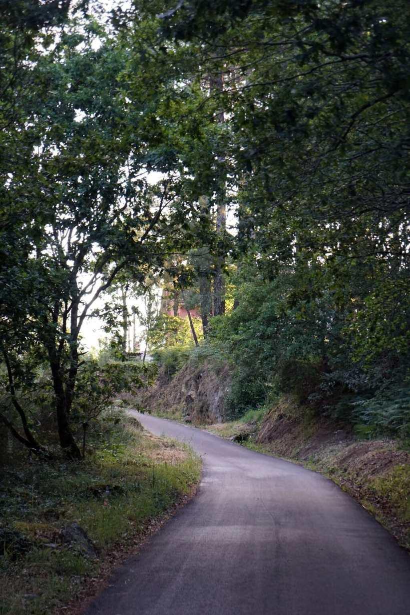 Camino Português DSC02077