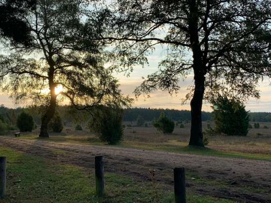 Wandern in der Südheide IMG_4274