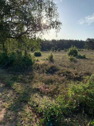 Wandern in der Südheide IMG_4284