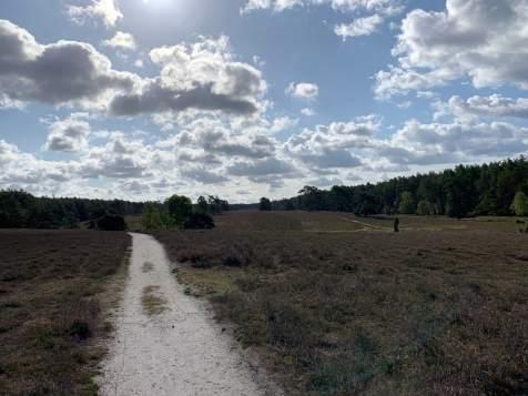 Wandern in der Südheide IMG_4331