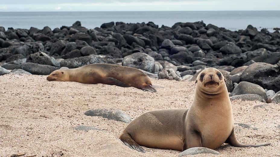 7-Galapagos-Seaman-Journey-Sea-Lion-Ecuador
