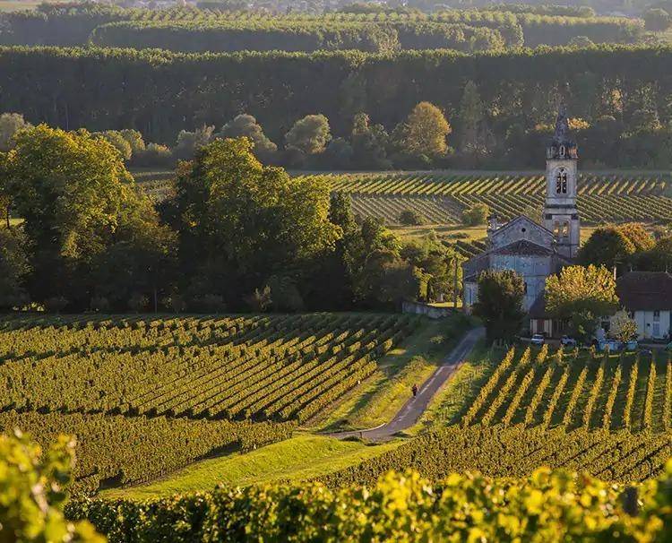 Bordeaux_FRANCE_SauternesLoupiac