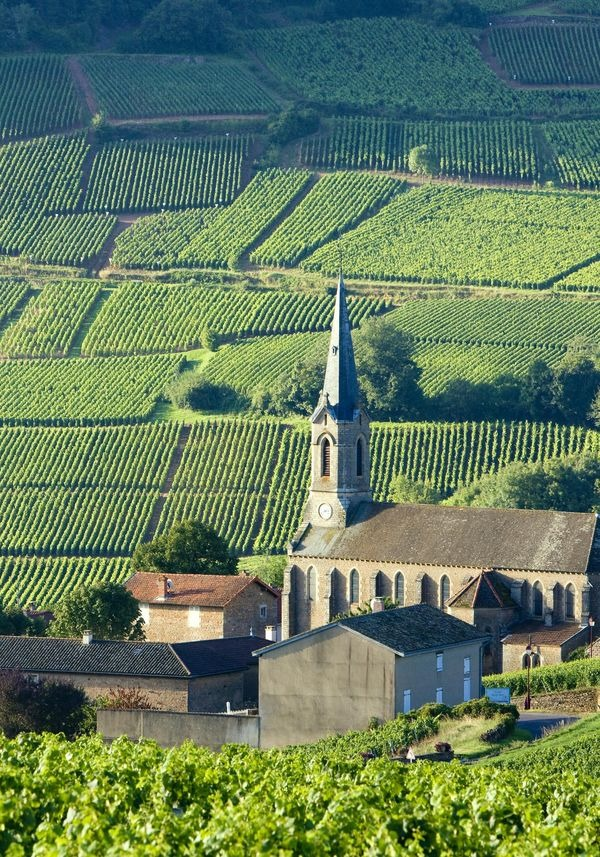 csm_Burgundy_b4ce9e3097
