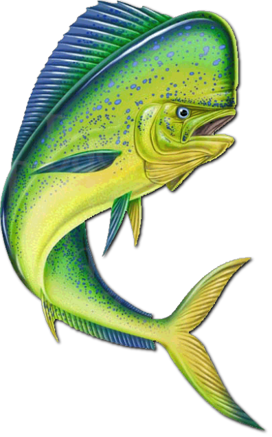 Fishing Bluedream Cozumel