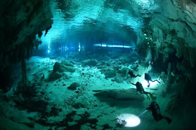 Bucea en los Cenotes   Blue Experience