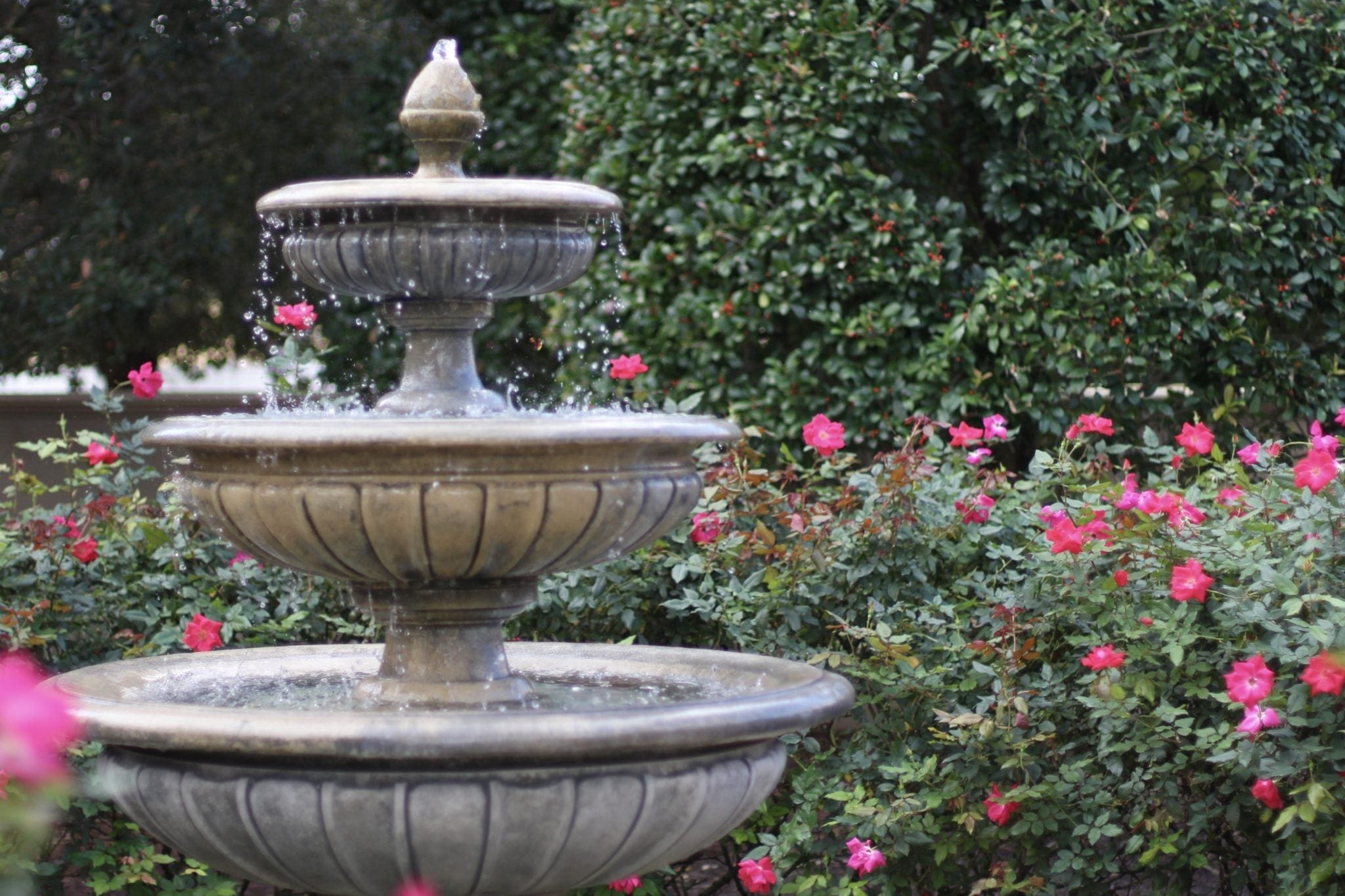 Backyard Water Features with red roses.