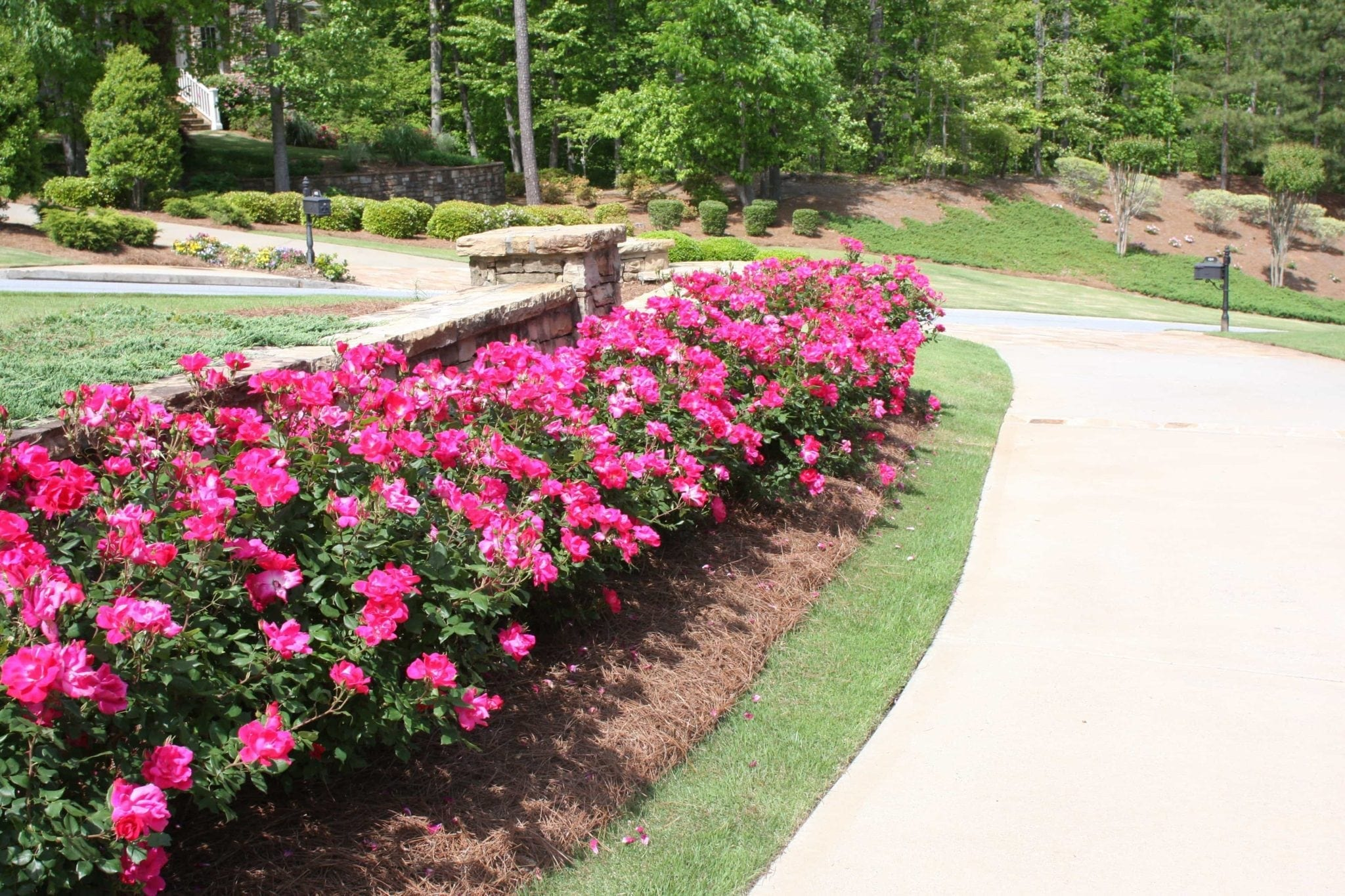 Border plants for your yard. Plants with a lot of colorful blooms.