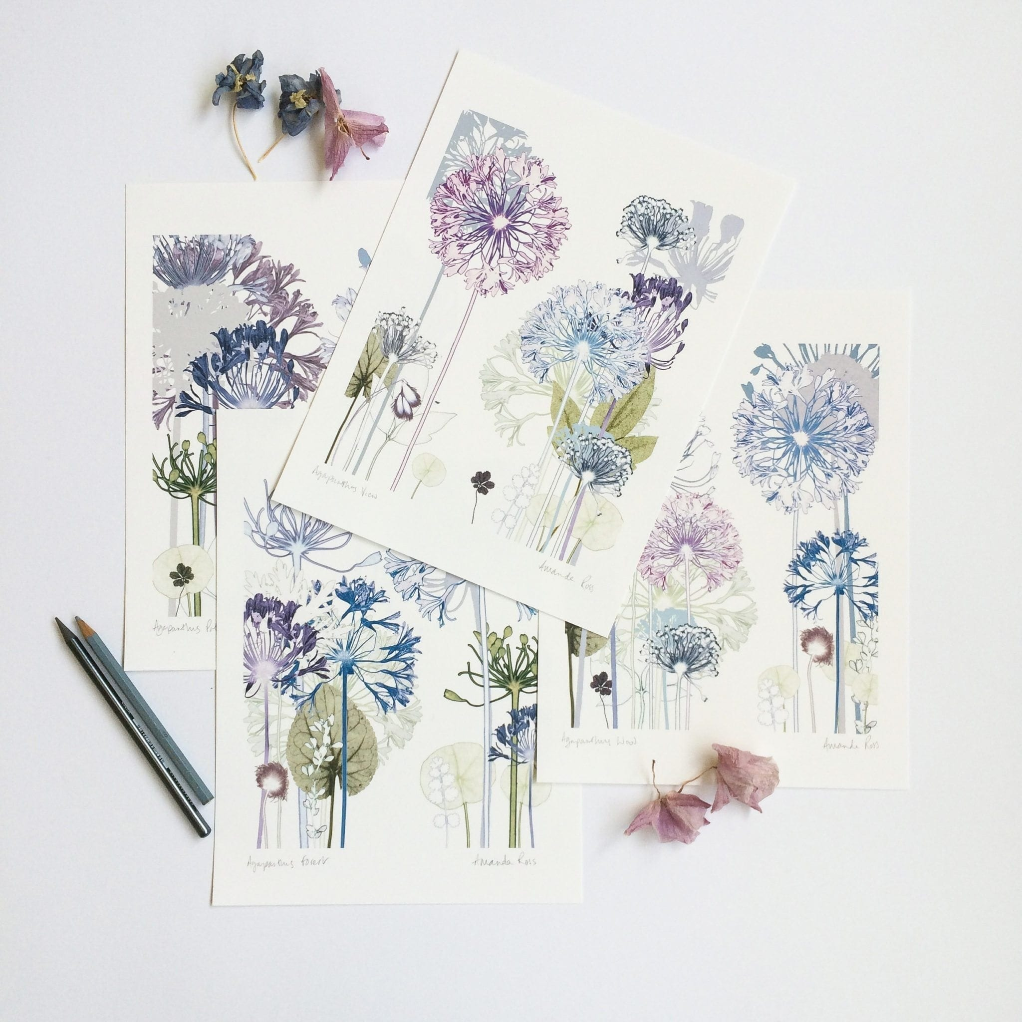 Floral artwork by artist Amanda Ross. Pretty wall art in botanical prints.