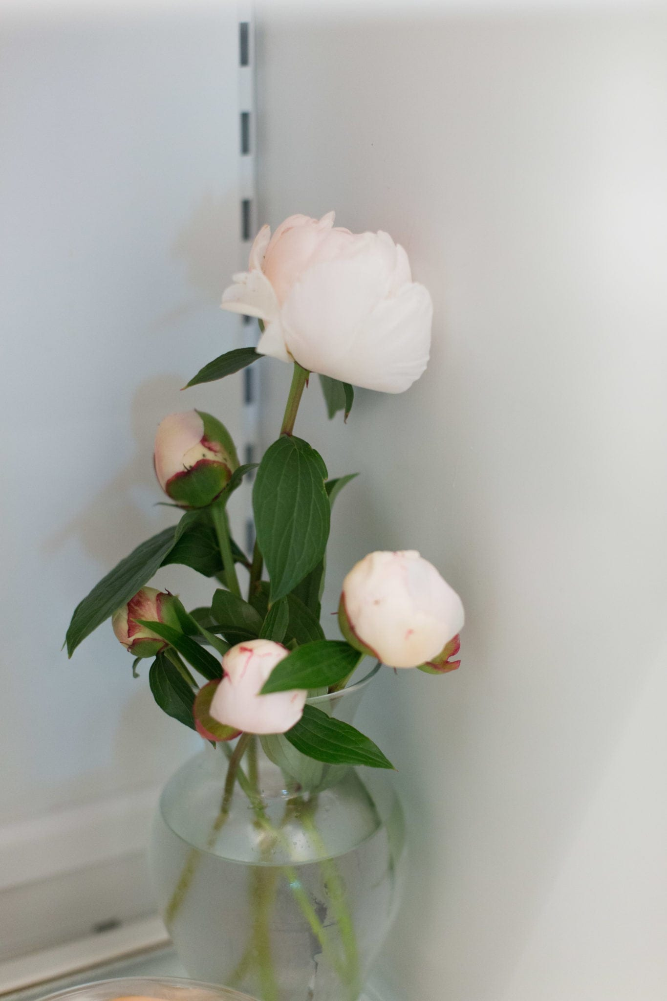 When do peonies bloom and how to cut them.