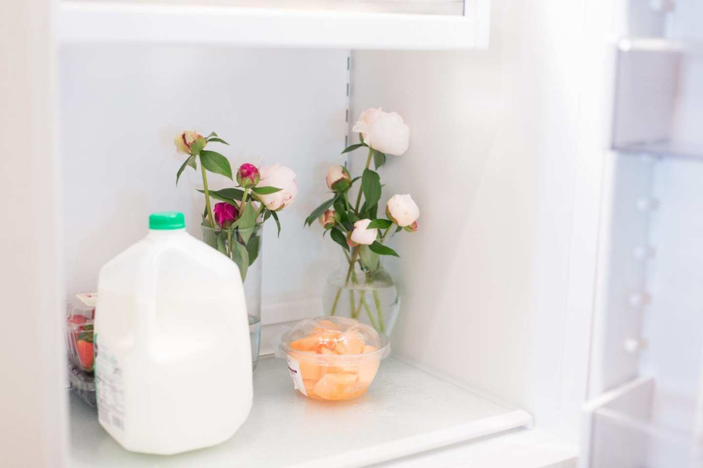Keeping peonies in the refrigerator and tips to keep peonies alive longer.