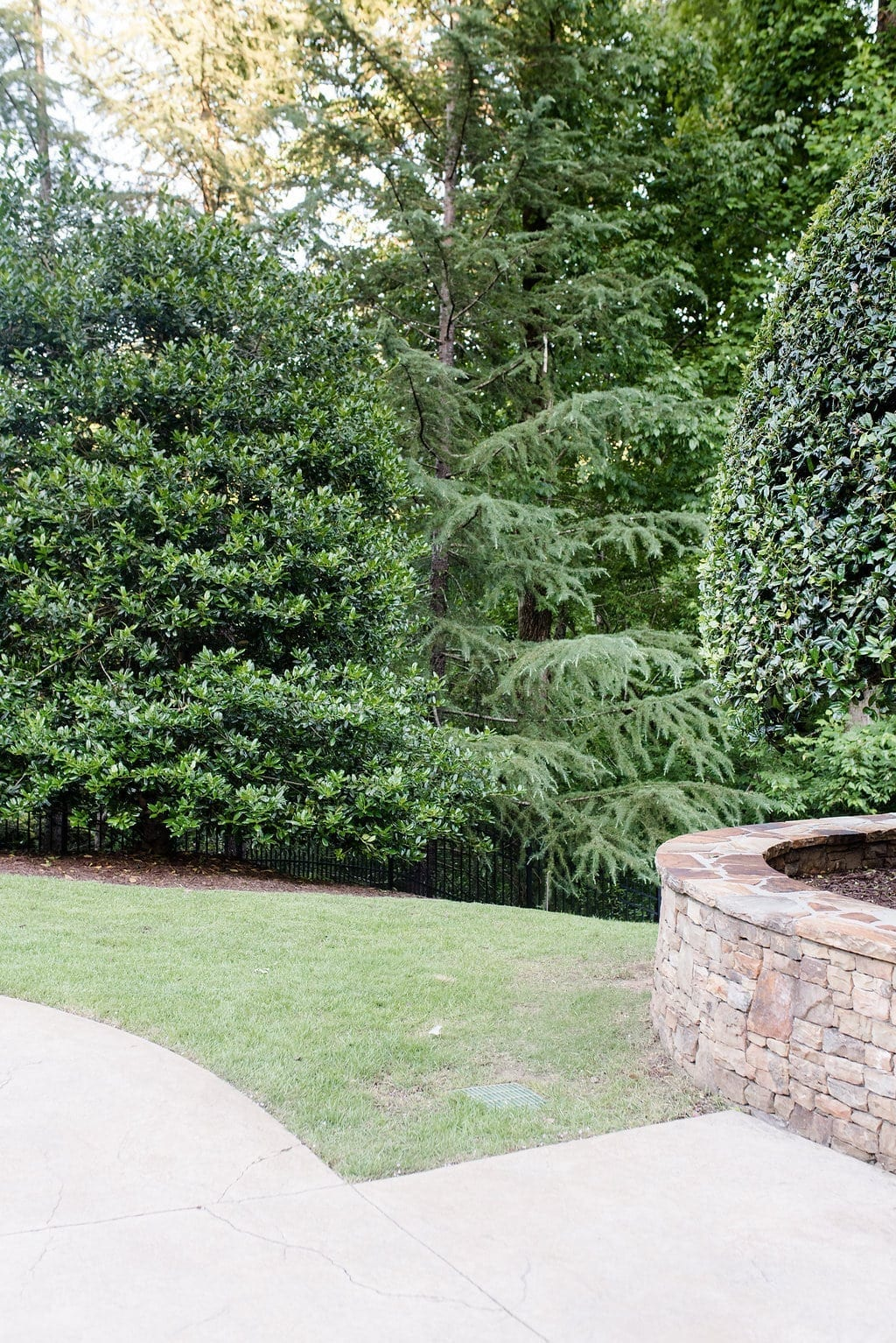 Using holly trees for yard privacy and backyard screening.