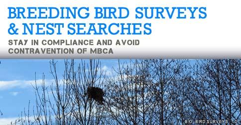 Breeding Bird Surveys and Nest Searches