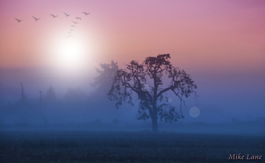 Old Tree in the Morning by Mike Lane